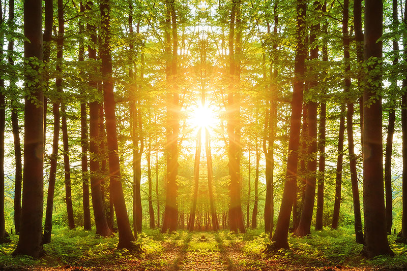 El éxito de la madera maciza: El Libro Banco de Derako